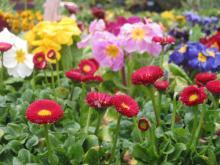 Цветы под зиму