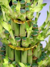 Декоративное оформление бамбука