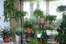 неприхотливые растения в доме