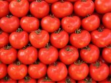 как вырастить томаты